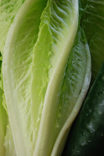 Beautiful green Romaine lettuce and dark green cucumber - photo by Carolyn Wing Greenlee