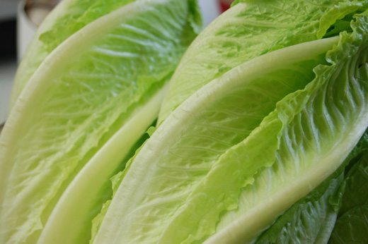 Close-up of beautiful green Romaine Lettuce - photo by Carolyn Wing Greenlee